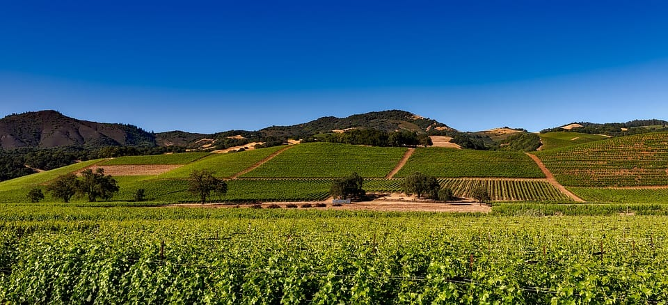 Landscape of the Napa Valley vineyard in California