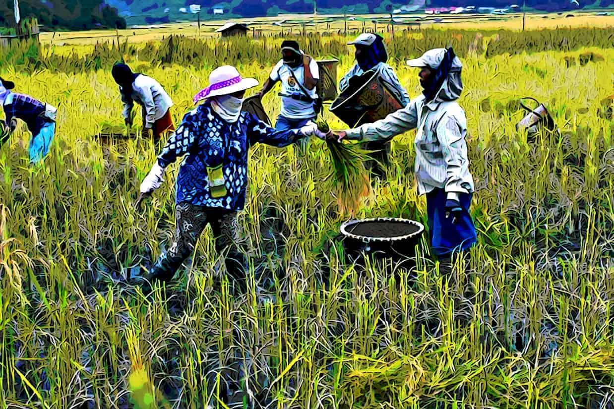 Farmers in Ziro Organic Farming 219943 pixahive 768x512 1