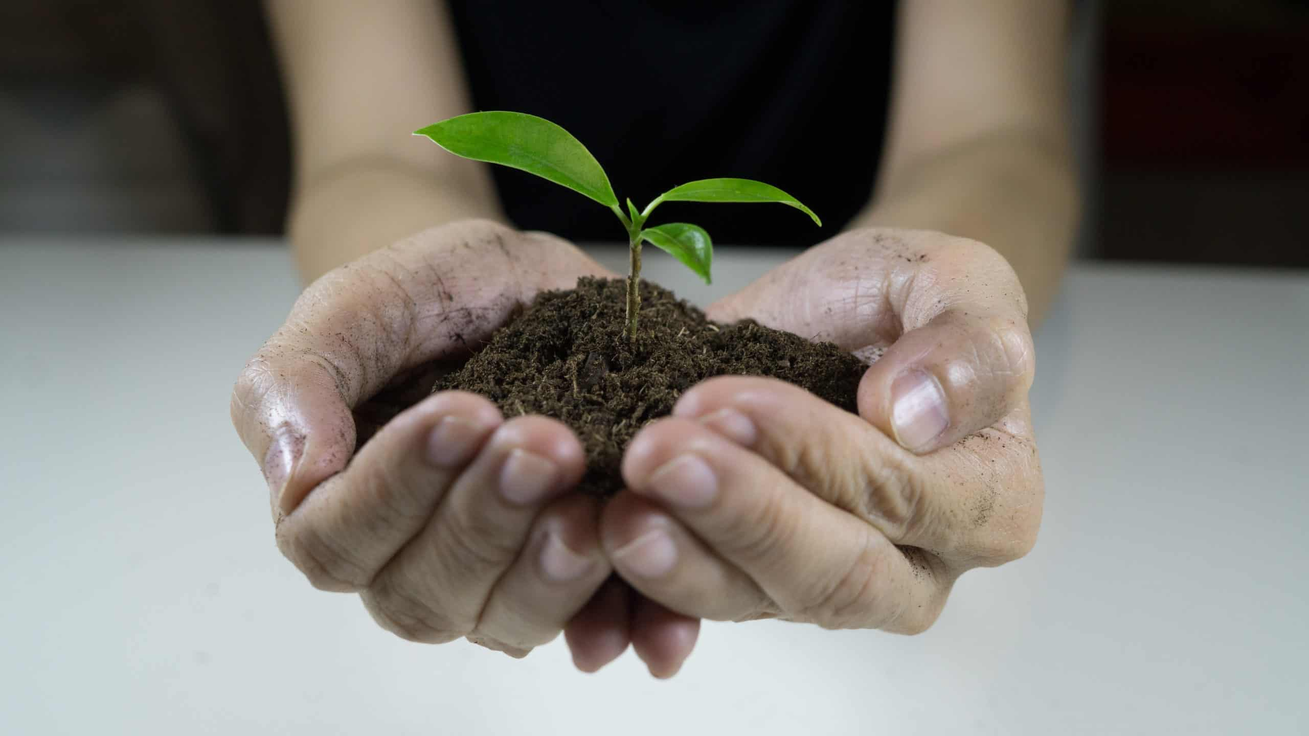 Saving earth hand holding soils and plant — twenty20 scaled