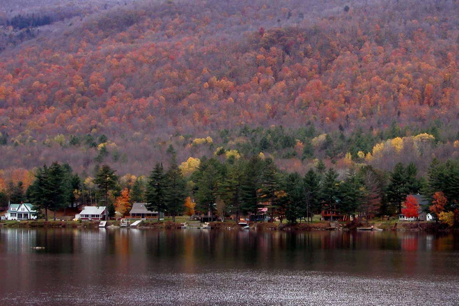 Upstate New York Swan Lake