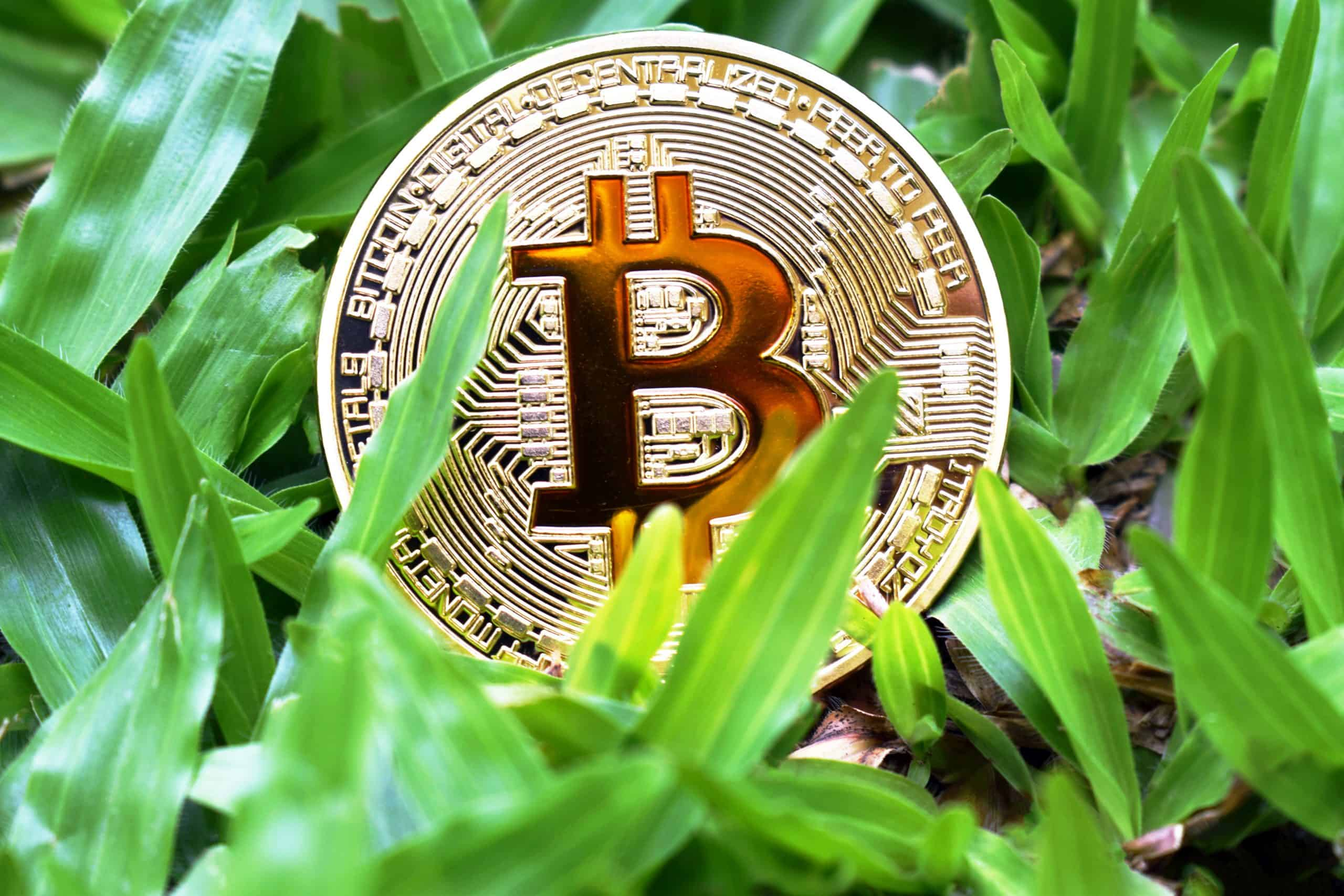 stockvault bitcoin in grass266900 scaled