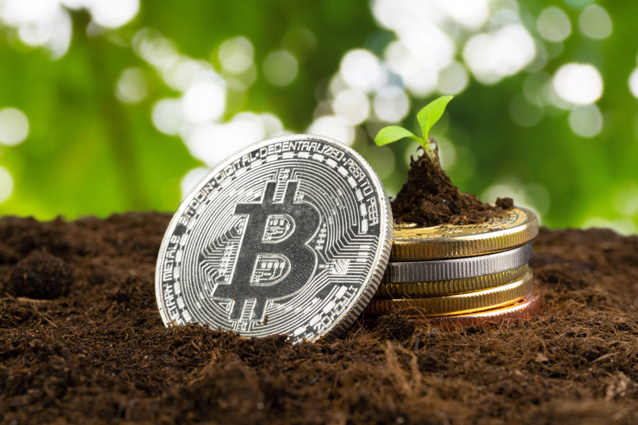 Sprout over bitcoin stack, crypto mining need to be sustainable