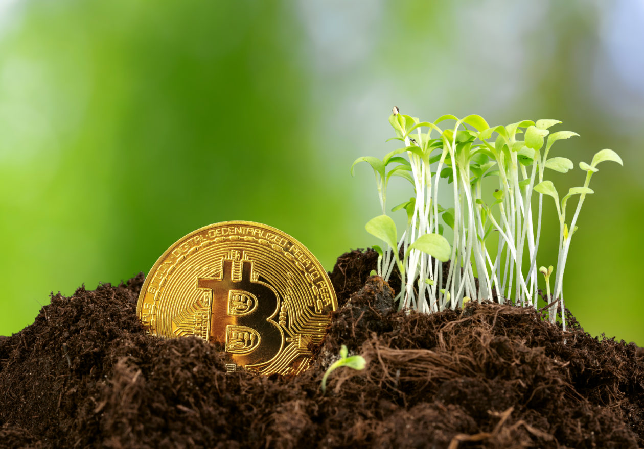A Bitcoin next to growing sprouts, decreased carbon footprint of blockchains make them a more viable solution to ESG issues