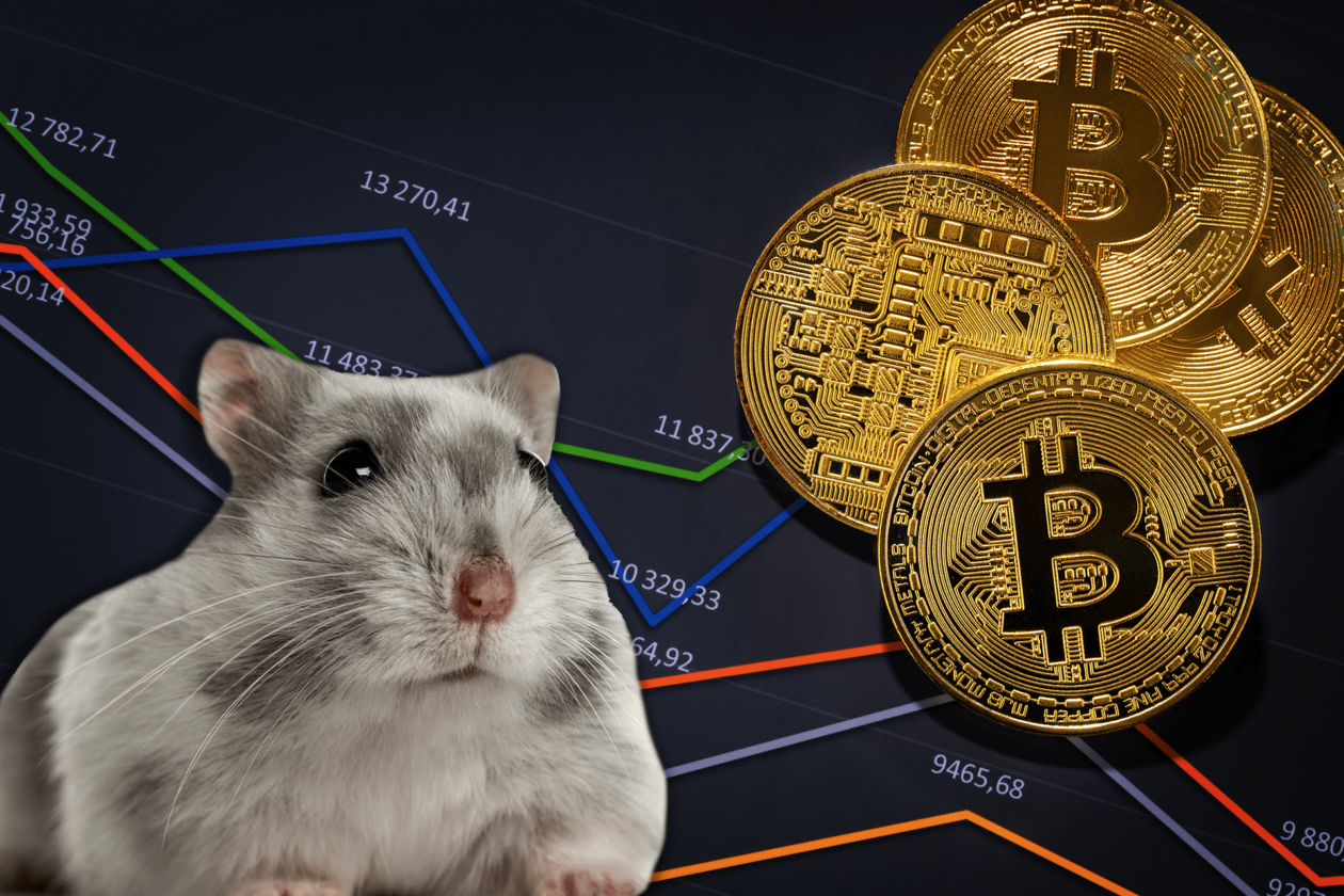 A crypto-trading hamster, Mr. Goxx, is outrunning Warren Buffet